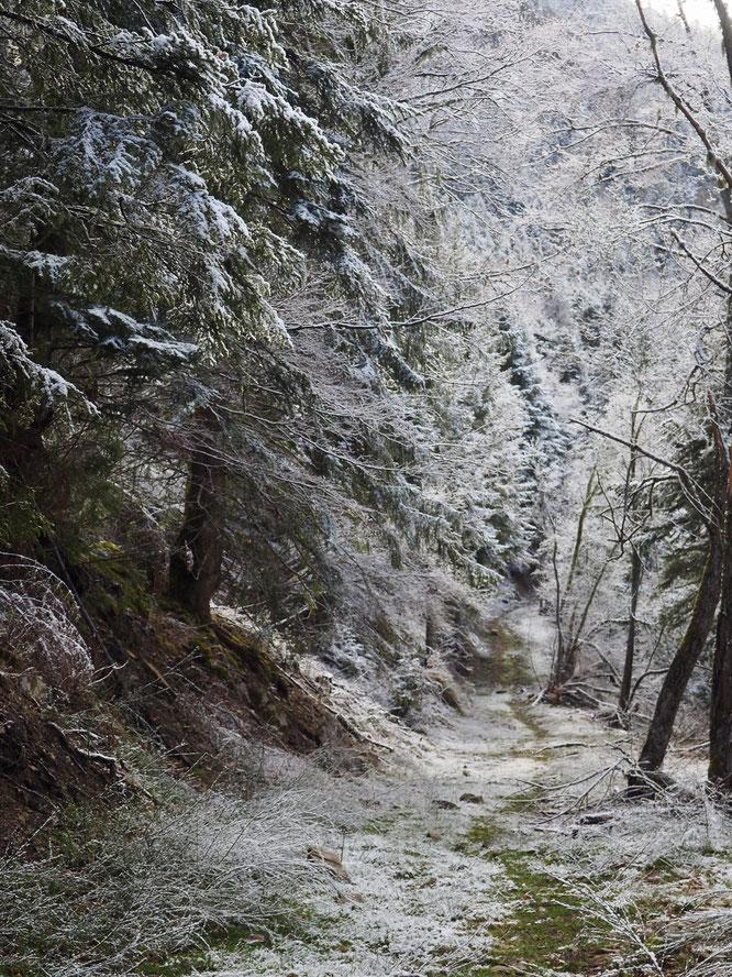 """Hier à Freydières : """"une toute petite neige fraîche de la nuit saupoudrait les sols, un beau soleil illuminait les arbres givrés..."""""""