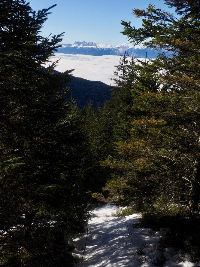 Forêt de Freydières vers 1600m. La vallée est sous les nuages et le Vercors émerge, un peu blanchi.