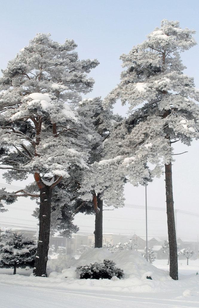 -16度・樹氷(霧氷)