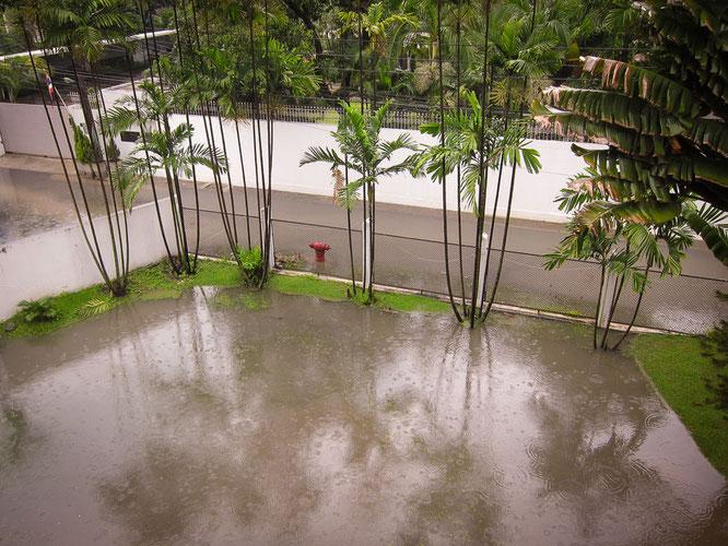 MEIN GARTEN IN BANGKOK
