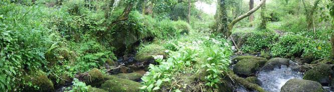 La selva de Cornualles, Inglaterra