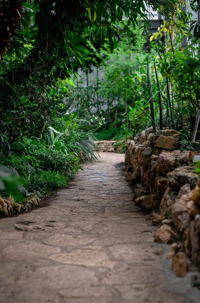 tuintrends 2021 wilde planten