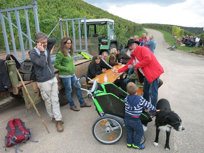 Pause im Weinberg. Die Wanderer sitzen an einer Biertischgarnitur oder sind and an einen Anhänger eines Traktors gelehnt. Dahinter sieht man den Weinberg mit belaubten Reben.