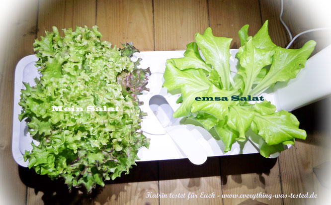 links - mein eigener Salat und rechts - der Salat von emsa