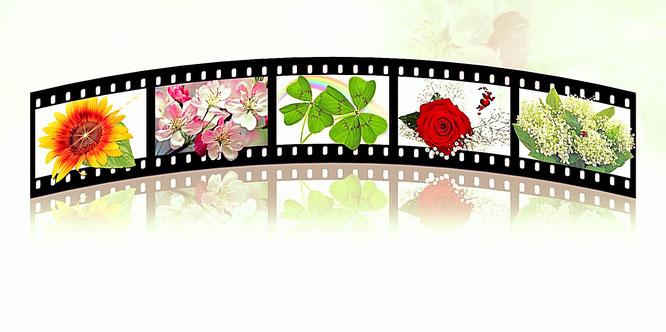 Wachtumsvideos
