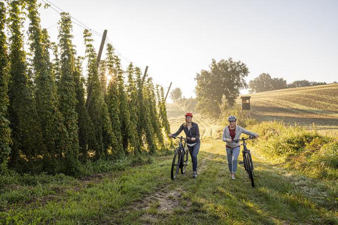 """Hohe Hopfenreben sorgen auf der Tour """"Hopfen entdecken"""" für angenehme Radltemperaturen © oberbayern.de"""