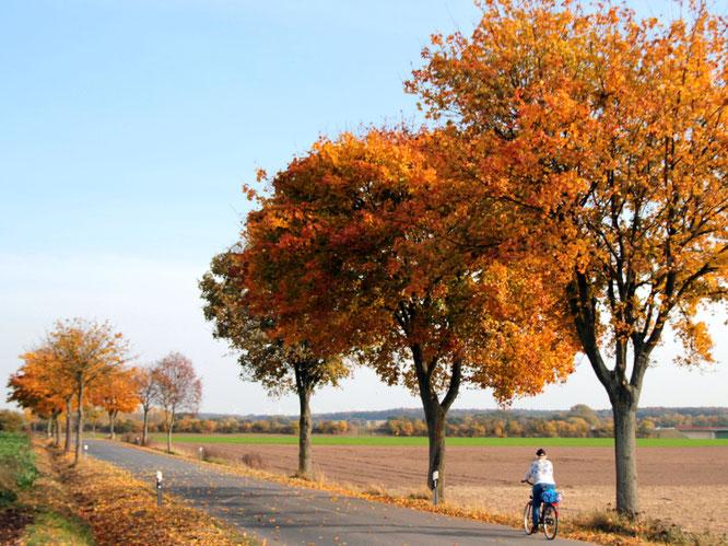 Herbstimpression Foto: Clauß, HeideRegion Uelzen