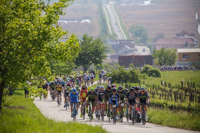 Neusiedler See Radmarathon vor zwei Jahren.