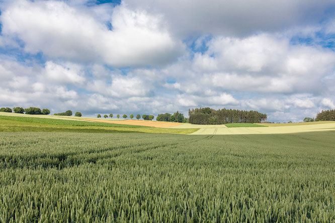 Malerische Hügellandschaft im Dachauer Land @ Dachau AGIL e.V., Florian Bachmeier