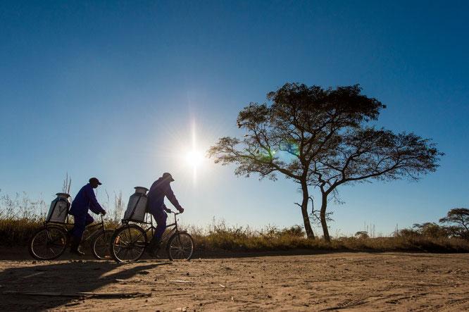 @World Bicycle Relief/ Milchbauern in Sambia können doppelt so viel Milch verkaufen, wenn sie für den weiten Weg zur Sammelstelle Fahrräder einsetzen anstatt zu Fuß zu laufen.
