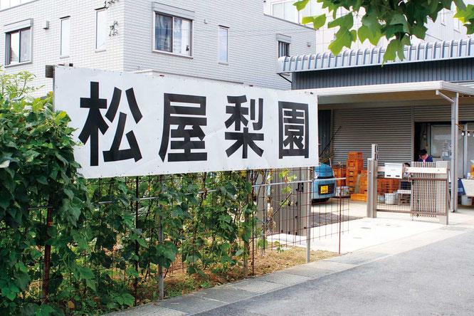【松屋梨園】即売所は収穫時期(7月末~10月初め)のみの営業。川崎市多摩区生田3-4-10。「松屋梨園」の看板が目印。