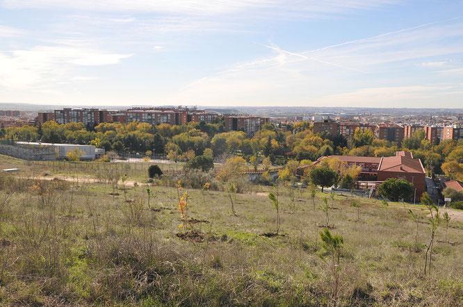 Vista de las plantaciones realizadas en primer término y del barrio de Santa Eugenia al fondo