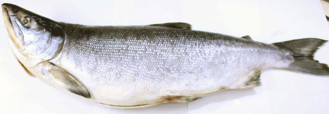紅鮭新巻画像大