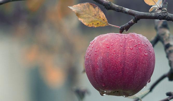 Gesunde Ernährung ist sehr individuell jeder hat andere Bedürfnisse, intuitives Essen
