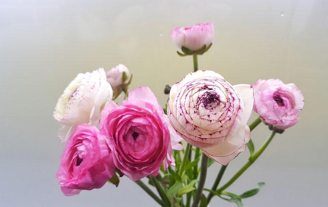 Frühlingsvorboten; Frühlingsgefühle; Frühjahrsmüdigkeit; Frühling; Ranunkeln; live4happiness2day; bloggingforinspiration; RandomReflections