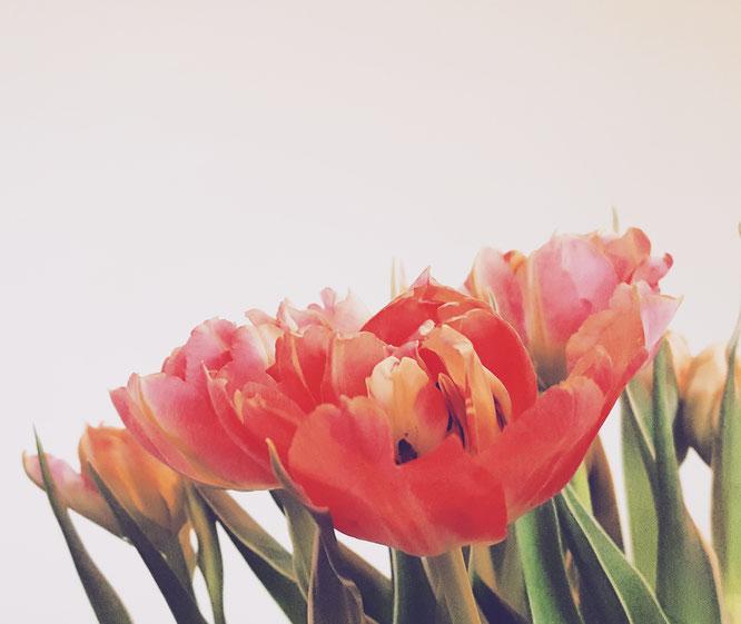 Blumenmachenglücklich; Frühling; Tulpen; live4happiness2day; bloggingforinspiration; RandomReflections