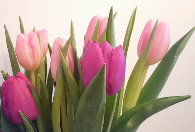 Tulpen; Jahreswechsel; Bloggeburtstag; live4happiness2day; bloggingforinspiration; RandomReflections