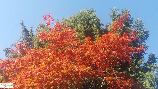 Herbst von seiner schönsten Seite: Bunte Blätter im Sonnenschein