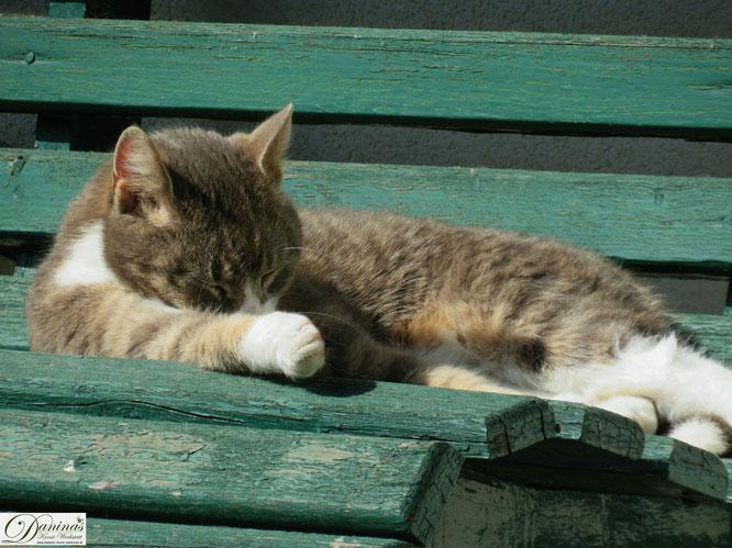 Katze Pauli genießt die Sonne im Frühling auf der Gartenbank.