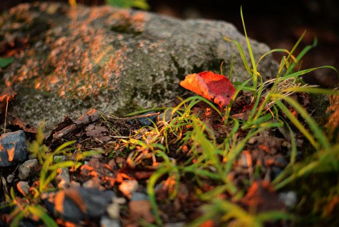 夕陽と落ち葉