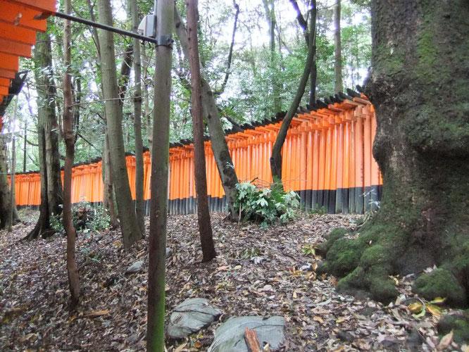 Les torii rouges de Fushimi Inari