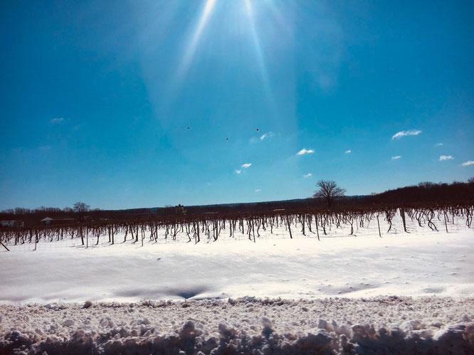 アメリカ 景色 横断 旅行 雪景色