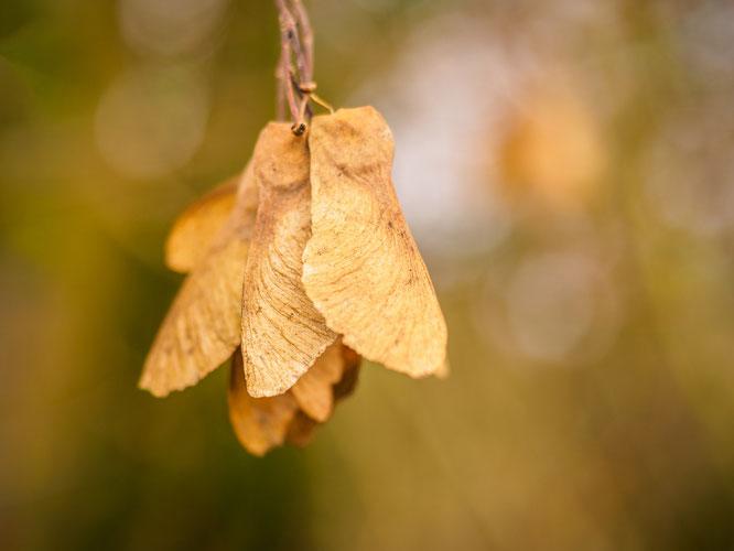 bokeh, omd, Herbst, olympus, mft, lightroom,