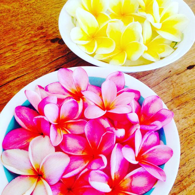 Erfahrungsbericht Elternzeit mit Baby auf Bali. Yoga Mama Blog MOMazing.