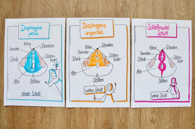 Anatomie und Aufbau: MOMazing #beckenbodenglück Beckenboden Yoga Mama Mami Blog