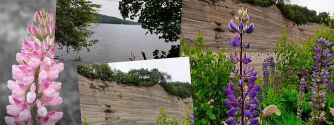 Wingertsbergwand-Mendig-Deutschland-Blumen-Wasser-See-Fels-Bäume