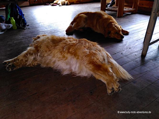 Argentinien - Bariloche - Cmping Petunia