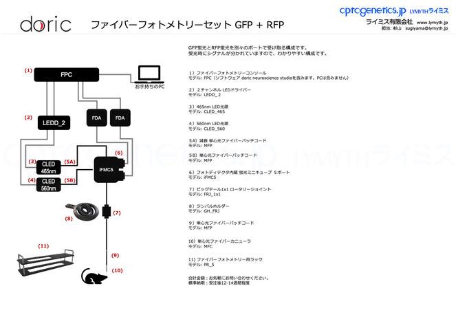 ファイバーフォトメトリーセット GFP + RFP