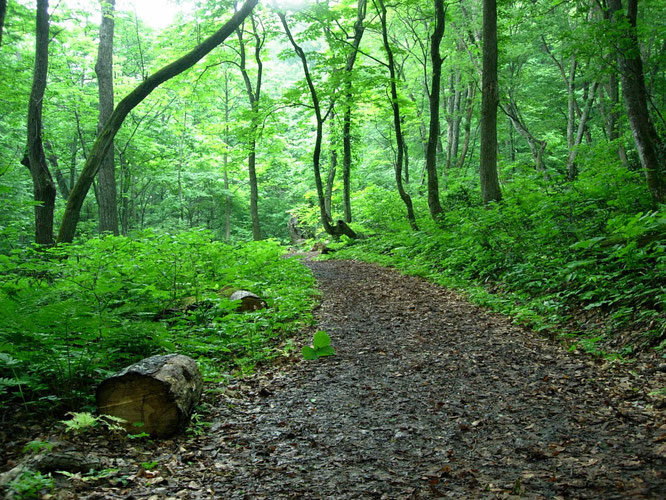 深呼吸したくなる豊かな森