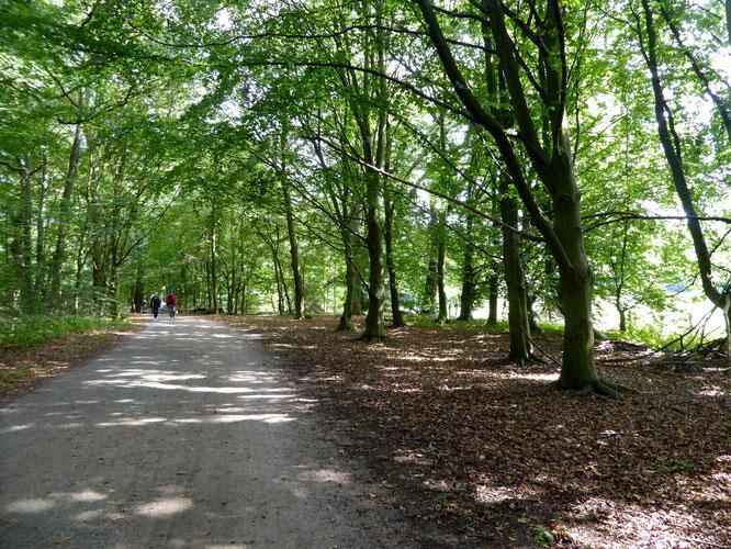 Bild: Wanderweg NSG Volksdorfer Teichwiesen
