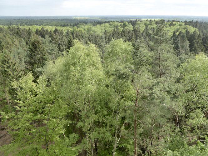 Panoramablick vom Aussichtsturm Hahnheide
