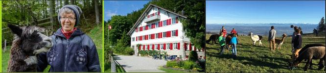 Wanderausflug Jura: Bild Frau mit Alpaka, Gruppenhaus Lagerhaus auf dem Balmberg im Jura und eine Gruppe mit Alpakas