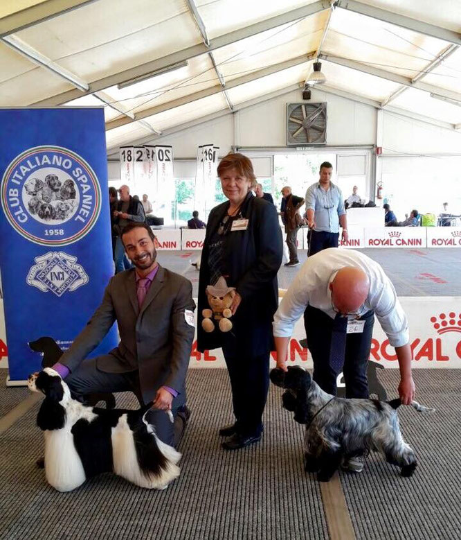 Elton John dei Gini - BEST IN SHOW  -  Francini's Day By Day - RBIS