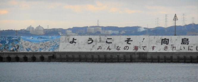 向島港の堤防のすぐ上に見える、5.8キロ先の玄海原発