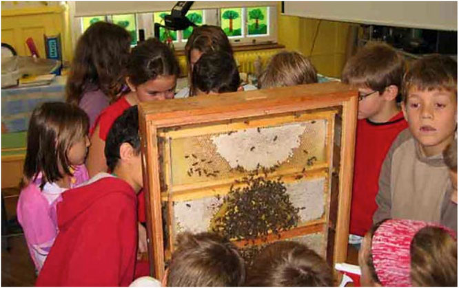 Spannender Unterricht mit Bienen im Klassenzimmer.
