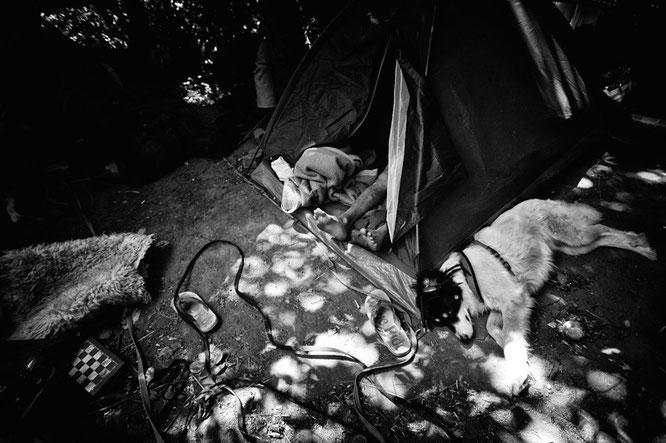 Obdachlosigkeit, Wohnungslosigkeit, Bruchsal, Hund, Füsse, Zelt, Sommer, Schach