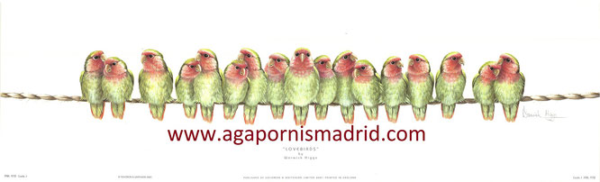 Lovebirds by Warwick Higgs