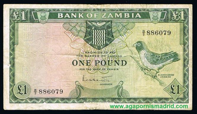 Billete de 1 libra de Zambia (1964) con uno A. nigrigenis