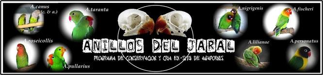 Imagen de la cabecera de la página web de Anillos del Jaral