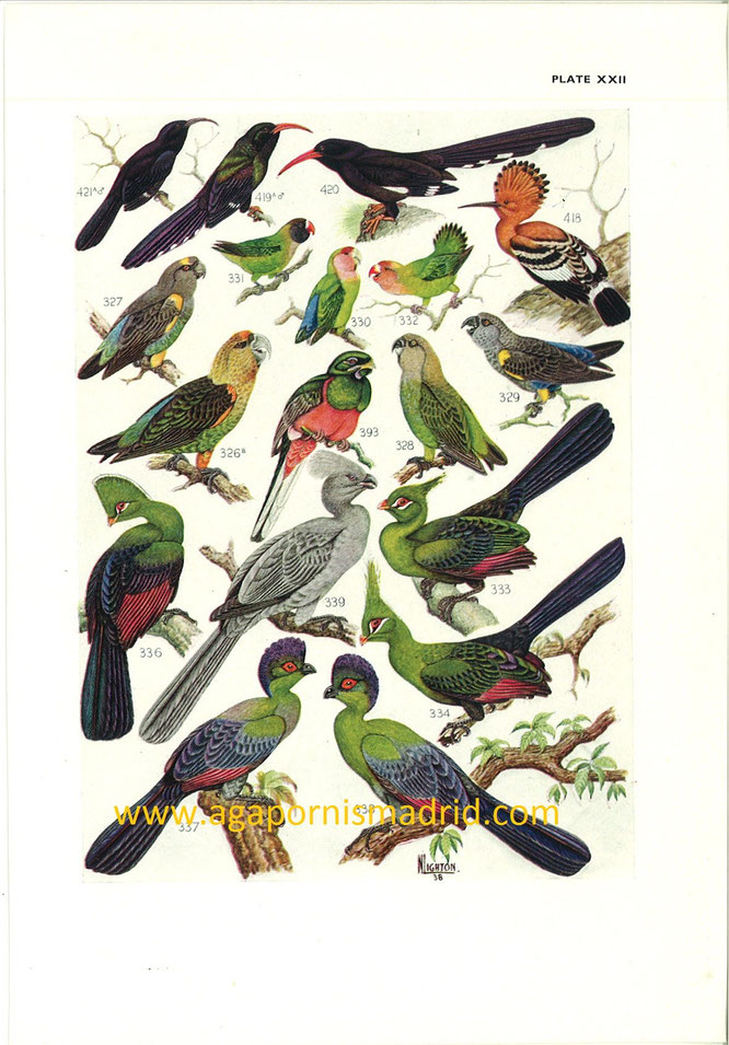 "1940 - ""The birds of South Africa"" (Dr. Austin Roberts, ilust. Norman C. K. Lighton)"