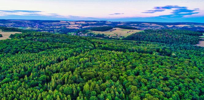 Der Wald bei Sitterswald macht einen Großteil des Gemeindewaldes aus.
