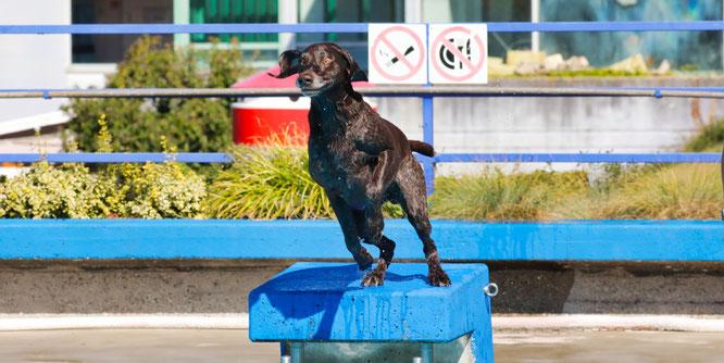 Am 19. September ist der große Tag für die Hunde im Kleinblittersdorfer Freibad.