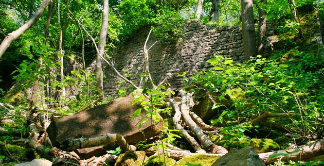 Der Urwald vor der Klostermauer in Kleinblittersdorf.