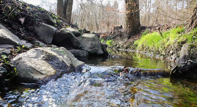 Bäche und kleine Flüsse im Saarland führen zu wenig Wasser.
