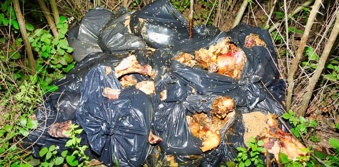 15 Müllsäcke mit Tierkadaver - von Wildtieren aufgerissen und von Maden überflutet.