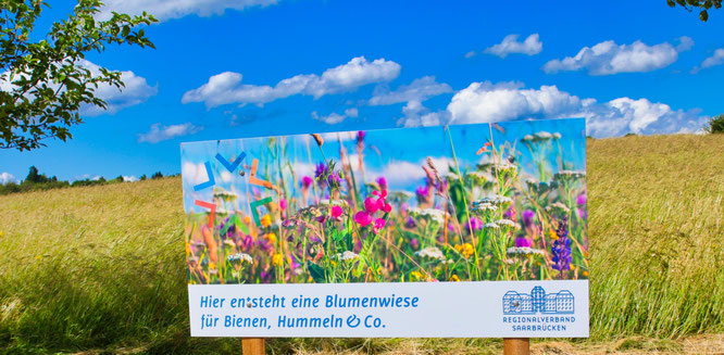 In Auersmacher werden seit mehreren Jahren Blühflächen angelegt.